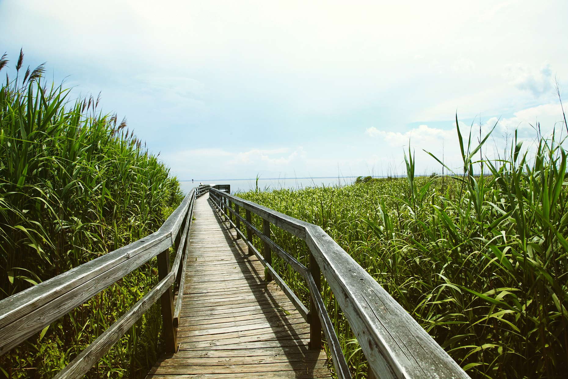 Currituck_Wetlands_021