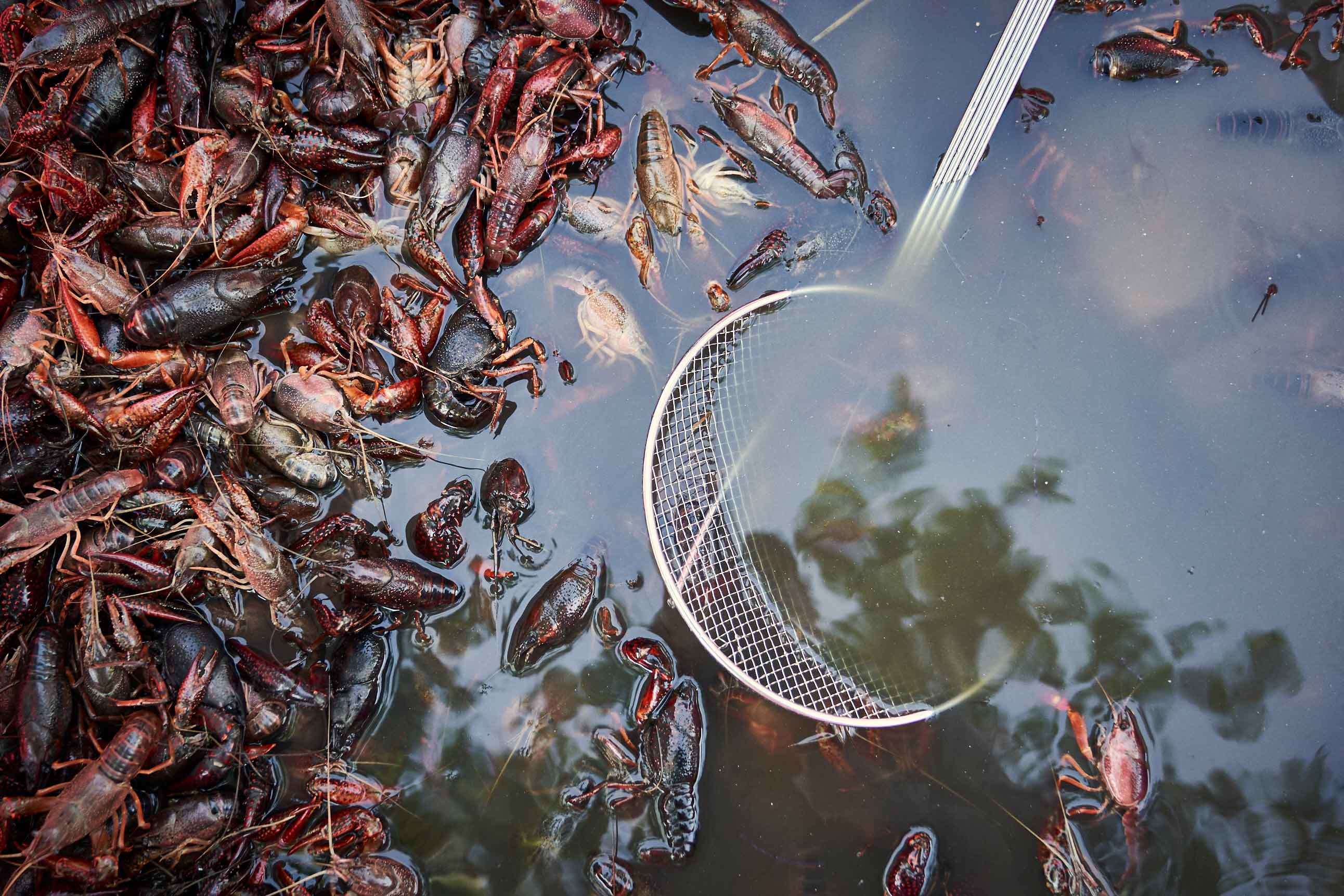 LS_Crawfish-boil__0885