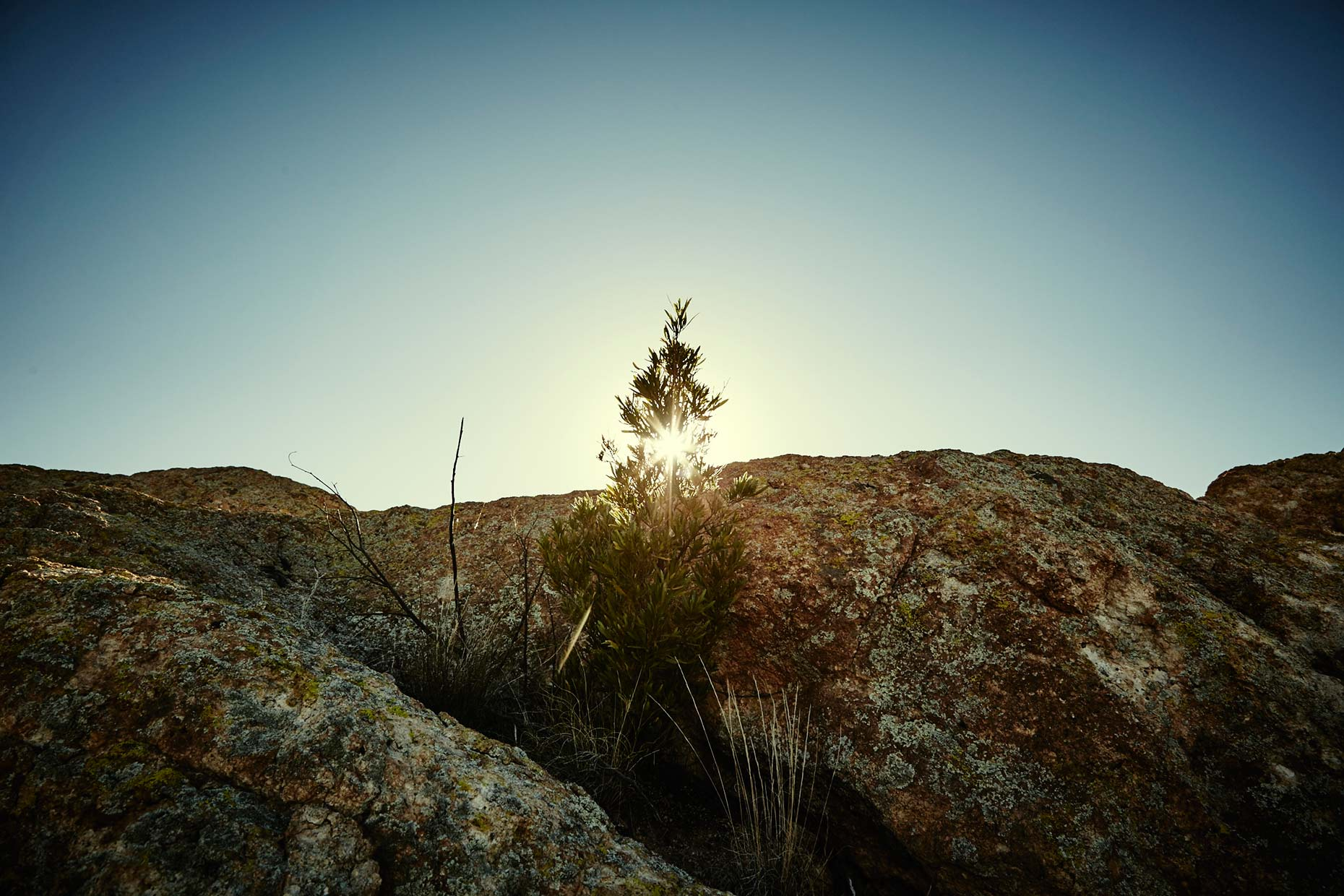 Old-Bull-Lee_Landscape_AZ-1_085