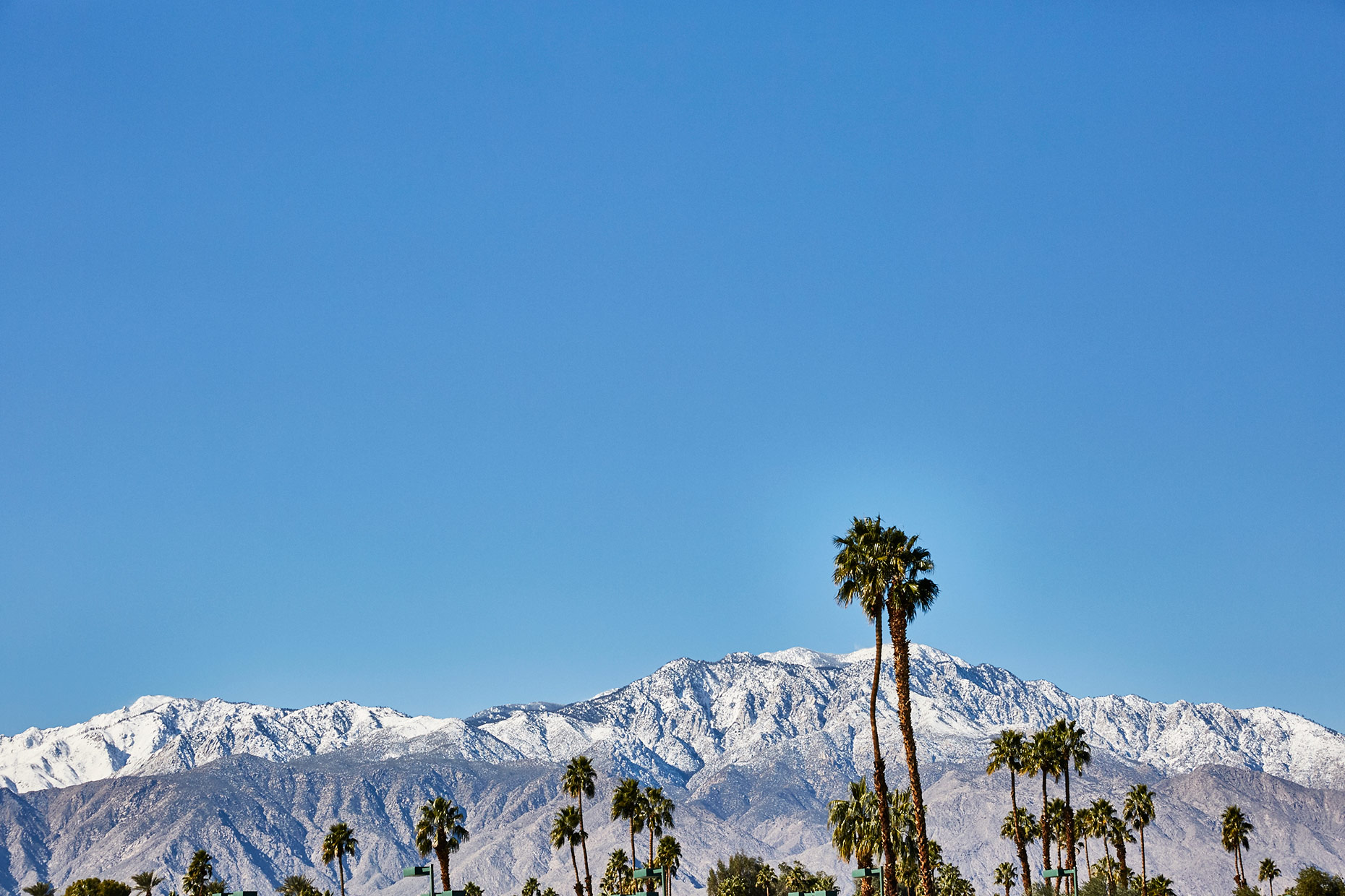 Palm-Springs_Palm-Trees_016