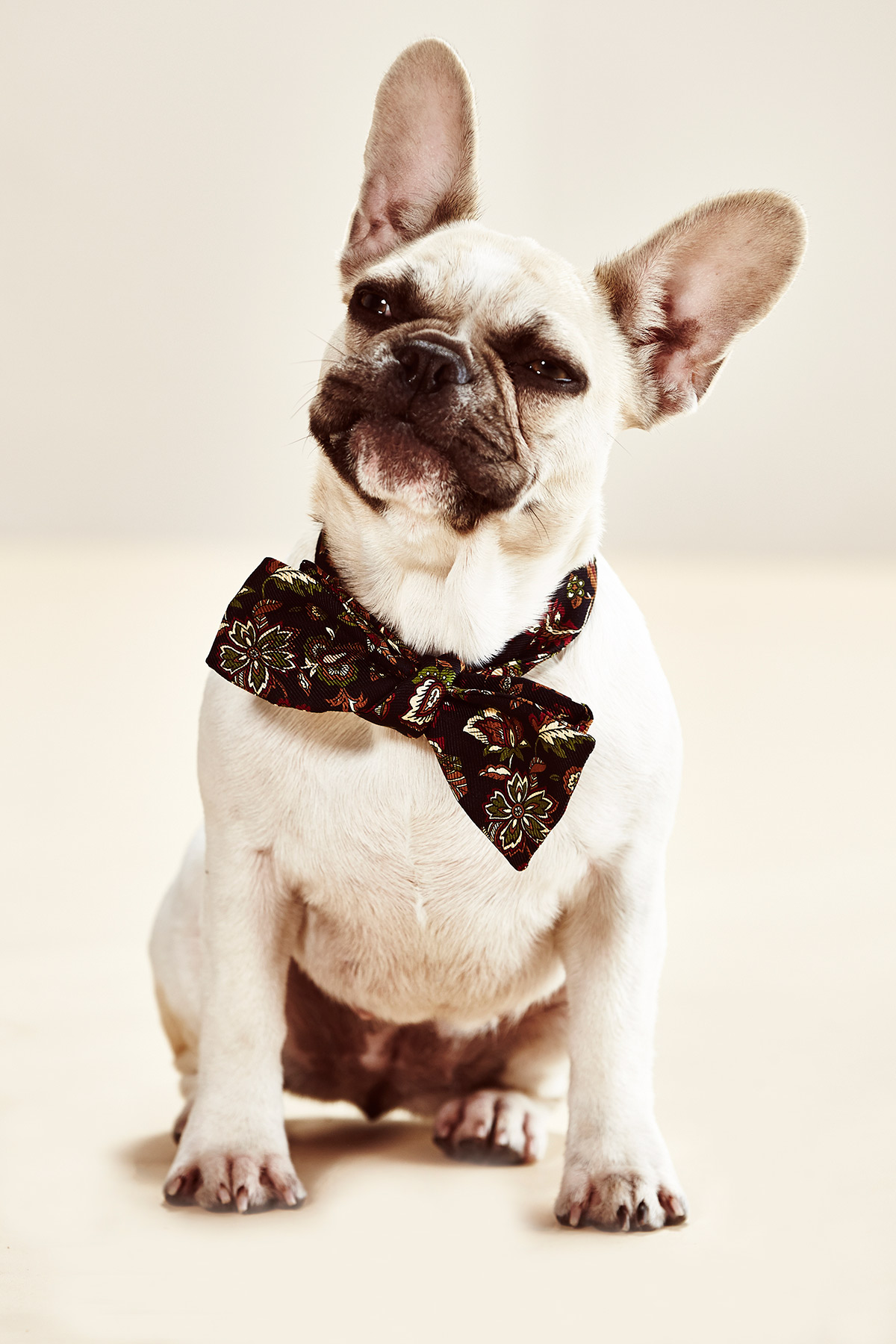 Viva_French-Bulldog_120